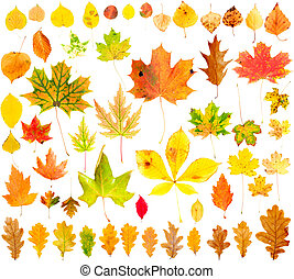 Autumn Leaves Collection - Multi colored fallen autumn...