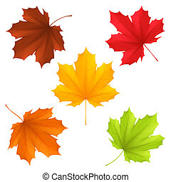 Autumn leaves. - Collection of color autumn leaves.