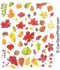 Autumn leaves - Collection of watercolor autumn leaves....