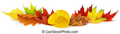 Autumn leaves - Colorful autumn leaves isolated on white