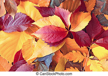 Autumn leaves, colorful leaves covered the ground in forest