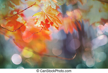 Autumn leaves - Colorful yellow leaves in Autumn season....