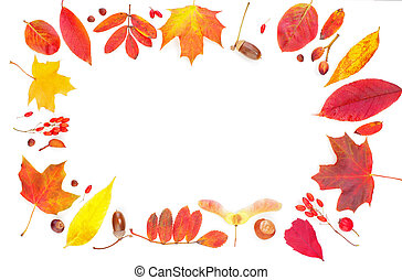 Autumn leaves composition frame isolated on white. Colorful fall leaves background border