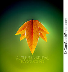Autumn leaves concept. Vector nature background