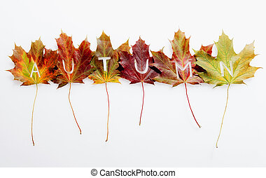 Autumn leaves concept with text