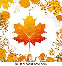 Autumn leaves design elements. plus EPS10
