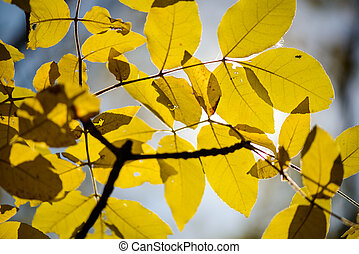 Autumn leaves design yellow leaves