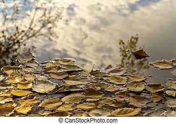 autumn leaves, drijv water, met, weerspiegelingen