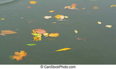 Autumn leaves drop water