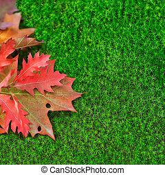 autumn leaves, eik, moss.