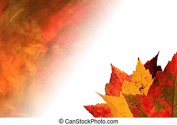 autumn leaves faded background