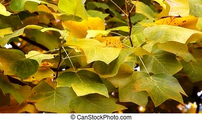 Autumn Leaves. Fall background