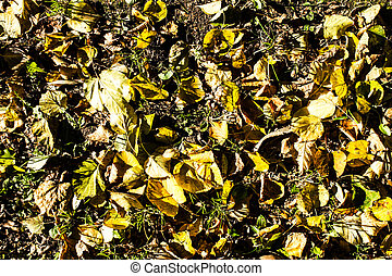 Autumn leaves fall background