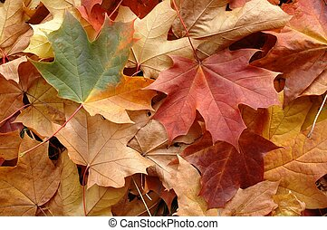 Autumn Leaves - Fallen leaves in a park.