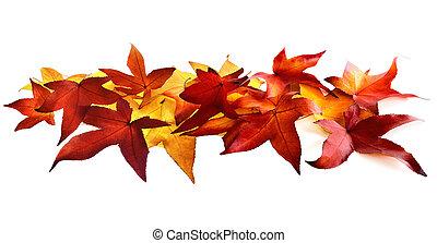 Autumn leaves fallen on white background
