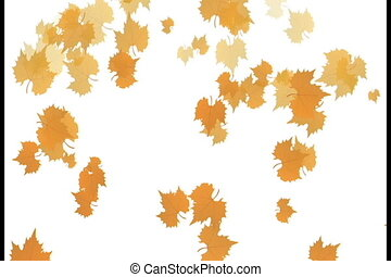 Autumn leaves falling down with white background, 4K video