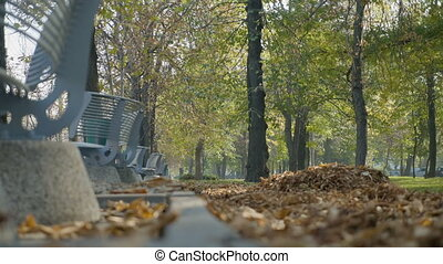 Autumn leaves falling from the trees near benches on a beautiful sunny day in the park