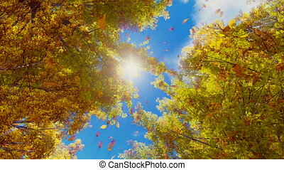 Autumn leaves falling from trees in slow motion - Look up at...