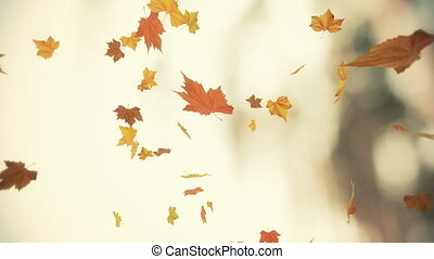 autumn leaves  - falling leaves  - looped and masked