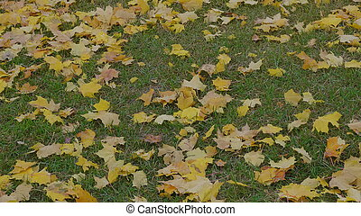 Autumn leaves falling, natural landscape