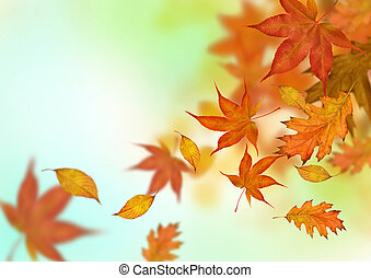 Autumn Leaves Falling - Autumn leaves in golden ambers and...