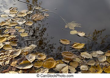 Autumn leaves floating on water with reflections