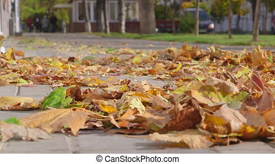Autumn leaves flying in the air on sidewalk