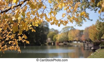 Autumn leaves foregrounds a calm lake.