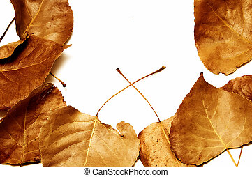 autumn leaves frame on a white background