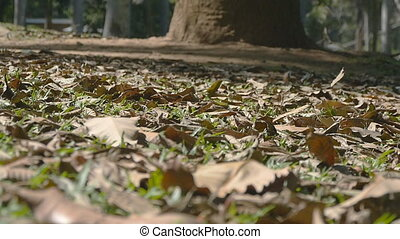 Autumn leaves gently moving on the ground along the autumn wind in tropical forest. Slow motion