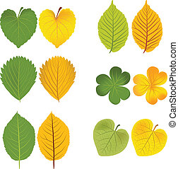 Autumn leaves green and yellow