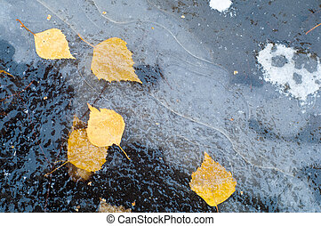 Autumn Leaves ice puddle. Photographed on the street