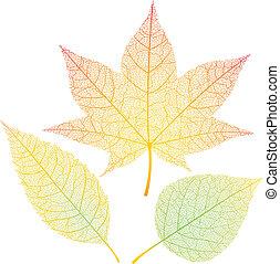 Autumn leaves - Three autumn leaves isolated on white. Eps8....