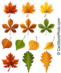 autumn leaves - Vector illustration - autumn leaves icon set...