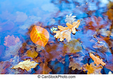 Autumn leaves in a pond