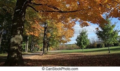 autumn leaves in country