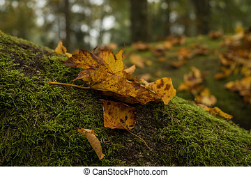autumn leaves, in, de, bos