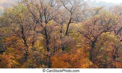 Autumn leaves in dramatic colors of yellow and orange, continue to cling to branches of trees in this forest wilderness.