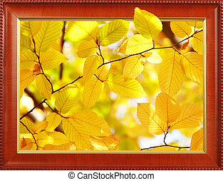 Autumn leaves in frame