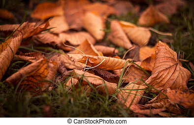 autumn leaves, in het park
