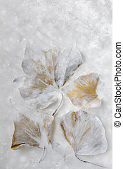Autumn Leaves in Ice.