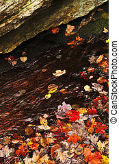 Autumn leaves in lake