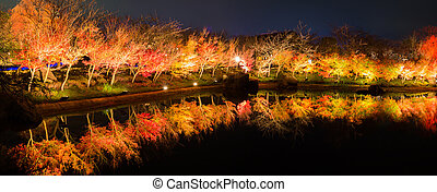 Autumn Leaves in night time.