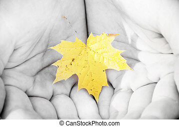 autumn leaves in the hands of men