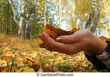 Autumn leaves in the hands