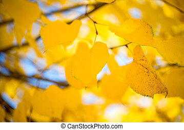 Autumn leaves in the tree