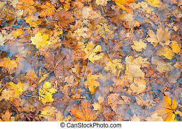 Autumn leaves in the water. Background photo.