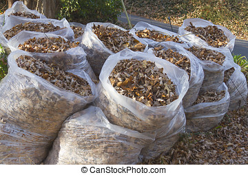 Autumn Leaves in Trash Bags - A group of clear plastic trash...