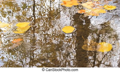 Autumn leaves in water