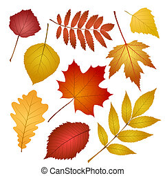 autumn leaves isolated on white background - collection...